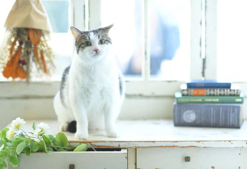 ペット撮影 猫