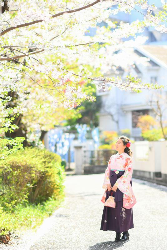卒業袴 着物 ピンク 袴 紫 ロケ撮影 桜